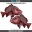 Mangrove-Jack-Decal-x2-Large-32cm-wide-boat-graphics-fishing-stickers-M011