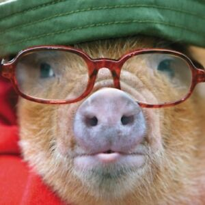 Pig In Glasses Happy Father/'s Day Greeting Card Paper House Photographic Cards