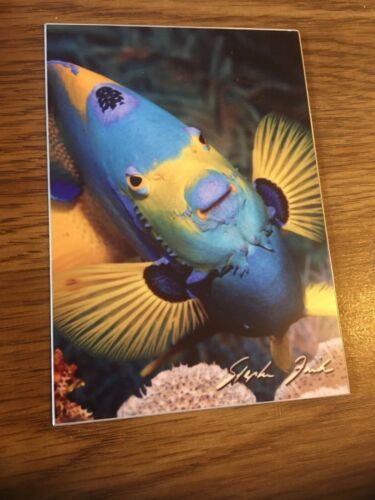 CA photographer Stephen Frisch. Fine art Fish photograph On metal by Sausalito