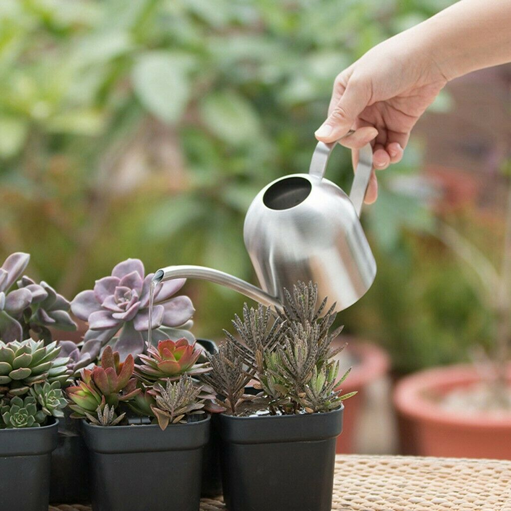 Mini Watering Can with Long Spout 500 ML Small Stainless Steel Watering Pot s