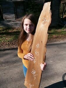 6+ Years Selling Sinker Cypress on eBay! Taxidermy Craft Wood Free Shipping!