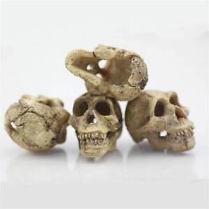 Head-Skull-Decor-Resin-Skull-Ornament-Aquarium-Fish-Tank-Decoration-Accessories
