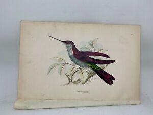 DELUXE ED Hand-colored Plates 1840 Jardine History Hummingbirds #4 Purple