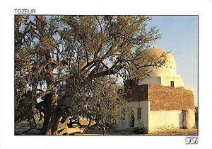 BR25821 Tozeur Th thousand year old jujube tree of Sadi ali bou Lifa tunisia