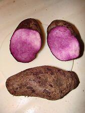 10 graines de UBE, IGNAME AILÉE, RATALU (Dioscorea alata) SEEDS SAMEN SEMILLAS