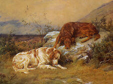IRISH SETTER IRISH RED AND WHITE SETTER DOG GREETINGS NOTE CARD TWO LOVELY DOGS