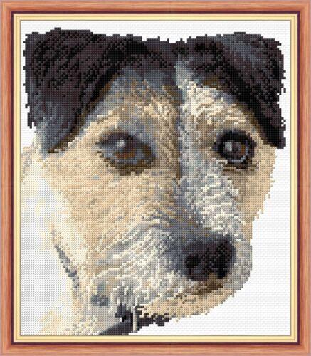 "14 cuenta Jack Russell Dog Shaggy Retrato-Cross Stitch Kit de 8.5 /""x 10/"" Premium"