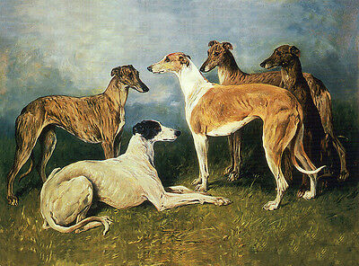 GREYHOUND CHARMING DOG GREETINGS NOTE CARD BEAUTIFUL DOGS IN RURAL SETTING
