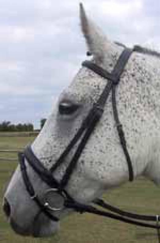 BN Superior Padded Aldsworth English Bridle Havana Pony