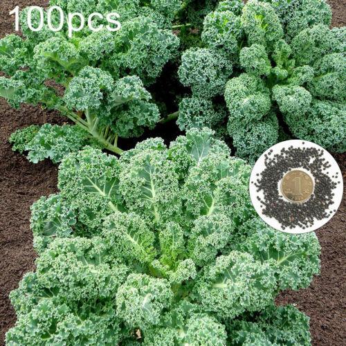 100Pcs Curly Kale Seeds Home Garden Backyard-Farm Nutritious Vegetable Plant  Ne