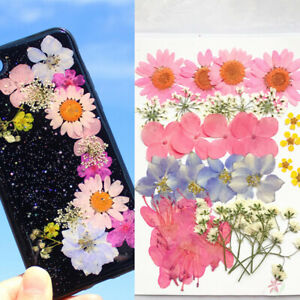 Real-Dried-Flower-Material-Dyeing-Flower-For-Craft-Phone-Case-DIY-AccessorieWFI