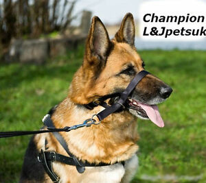 Padded-Head-Collar-Champion-Dog-Training-Halter-Stops-Dog-Pulling-Training-Tool