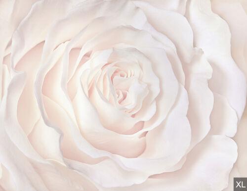 Papier peint toile rose-Papier peint papier peint papiers peints photos pour le salon fdb466
