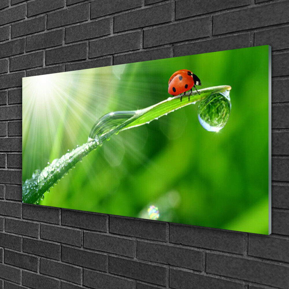 Image sur verre acrylique Tableau Impression 100x50 Herbe Soleil Coccinelle