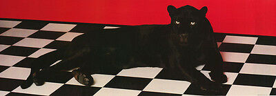 POSTER : ANIMAL  :  BLACK PANTHER -  FREE SHIPPING ! #6905   RP64 G