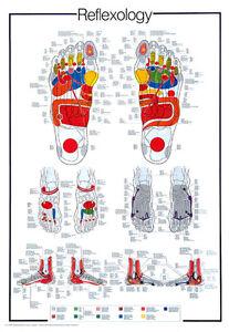 Huge REFLEXOLOGY Foot Reflex Pressure Points Info-Packed