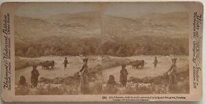 Samaria Palestina Shomrôn Israele Foto Stereo Vintage Albumina 1900
