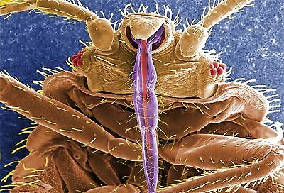 Diatomaceous Earth 800g Mite Flea Bed Bug Killer Treatment Household Insecticide Ebay