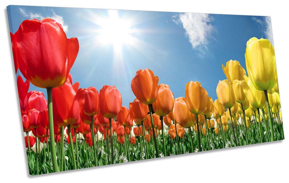 Floral Flower Field Tulips BOX FRAME FRAME FRAME CANVAS ART PANORAMA Print 7b3a20