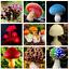 100 PCS Seeds Red Mushroom Garden Ornamental Miniature Plants Mix Free Shipping