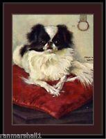 English Picture Print Japanese Chin Spaniel Dog 2 Art