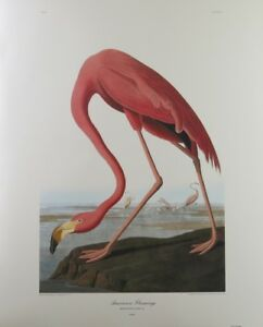FLAMINGO-BY-JOHN-JAMES-AUDUBON