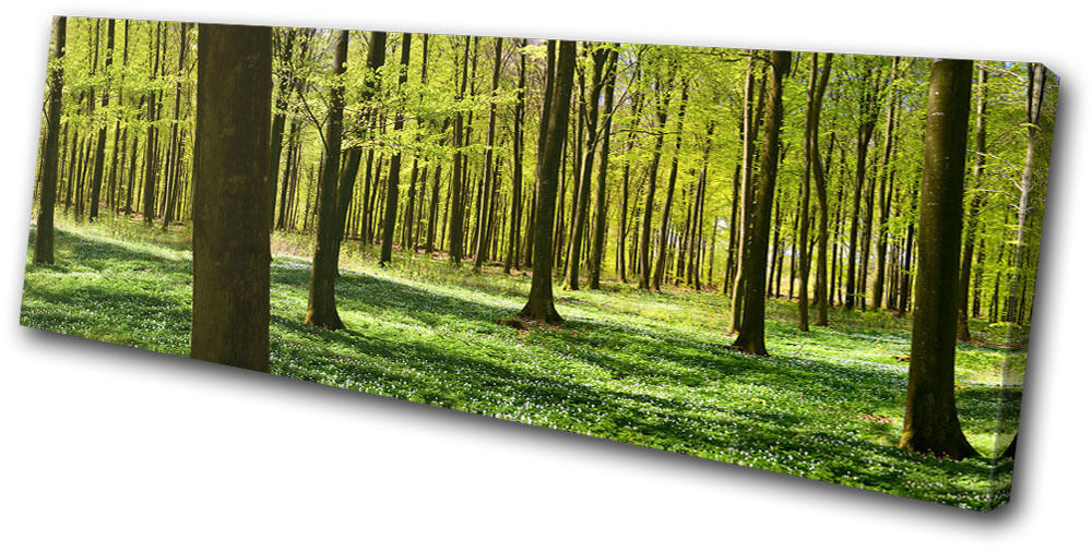 Landscapes Forest SINGLE TOILE murale ART Photo Print