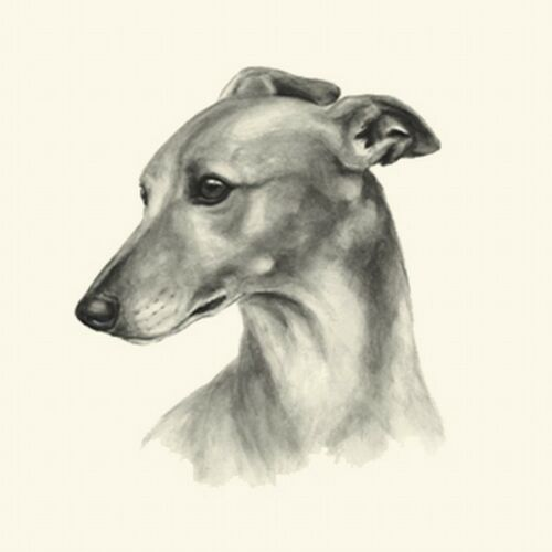 Dog Show Ring Number Clip Pin Breed Whippet