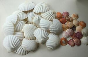 A-Selection-Of-Shells-for-Artt-and-Crafts-or-Cookery-16-Large-2-Heart-20-Small