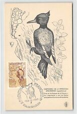 ARGENTINA MK 1960 FAUNA VÖGEL BIRDS MAXIMUMKARTE CARTE MAXIMUM CARD MC CM d9584
