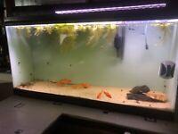 Aquarium Buy Or Sell Fish In Regina Kijiji Classifieds
