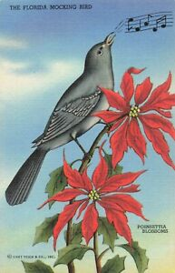 Postcard-Mocking-Bird-Florida