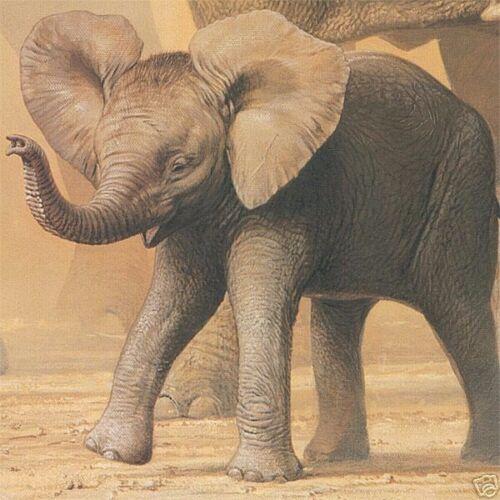 "36/""x25/"" AFRICAN ELEPHANTS /& NAMAQUA DOVES by IAN COLEMAN WILDLIFE CANVAS"