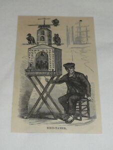 small-1879-magazine-engraving-BIRD-TAMER-Madrid-Spain