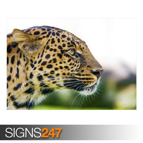 3377 Animal Poster ZOO LEOPARD Picture Poster Print Art A0 A1 A2 A3 A4