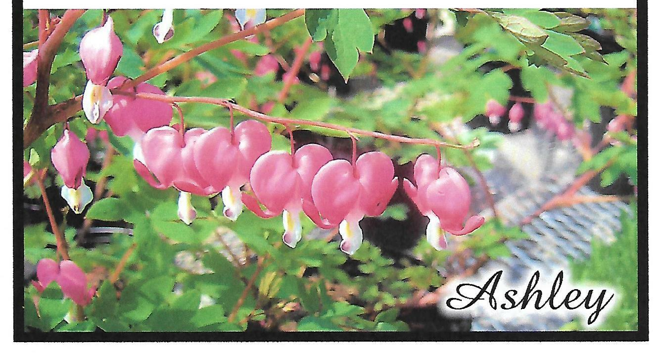 CHECKBOOK COVER PERSONALIZED PINK BLEEDING HEARTS