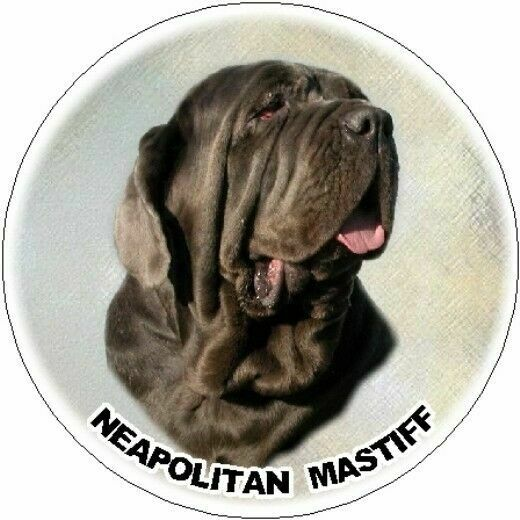 2 Neapolitan Mastiff Car Stickers By Starprint