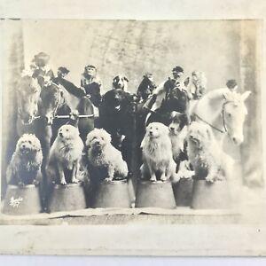 Antique Photo of Vaudeville Dog, Monkey and Pony Show