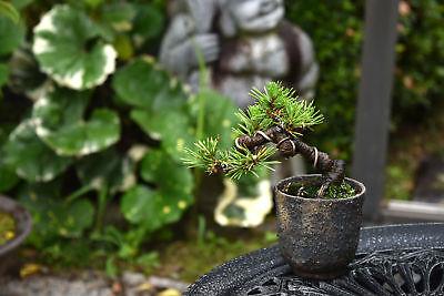 Kaneshin Bonsai Branch cutter #3A Regular Edge for All type Bonsai