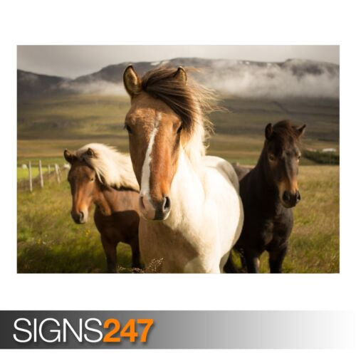 ICELAND HORSES Animal Photo Picture Poster Print Art A0 A1 A2 A3 A4 3813