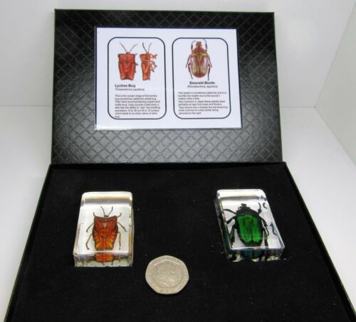 Arthropods in resin real insects scorpion beetles spider crab /& card /& gift box