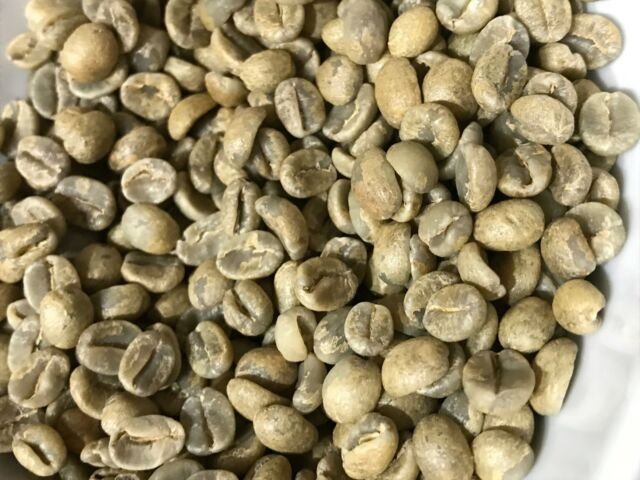 Green Coffee Beans El Salvador Honey Process Choose Your Size 3 5