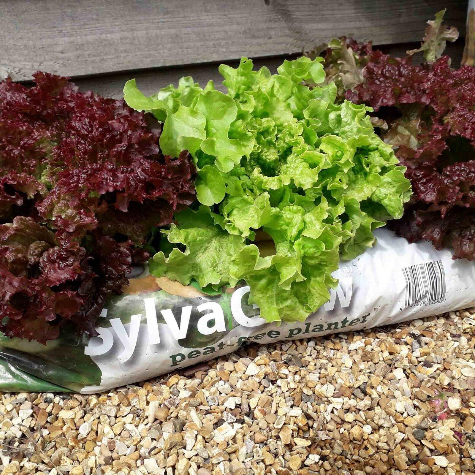 RHS SylvaGrow Peat-Free Organic Planter Soil Association Approved 45L Grow Bag