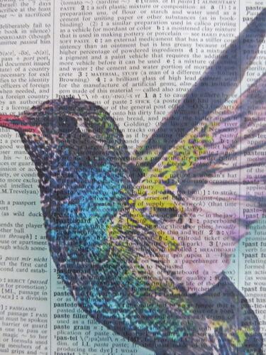 bird club posters Hummingbird Print No.865 housewarming gifts dictionary art