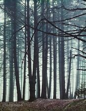 1950's Vintage 16x20 NATURE LANDSCAPE Forest Abstract Photo Art By ELIOT PORTER