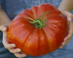 Vegetable-Tomato-Gigantomo-10-Seeds