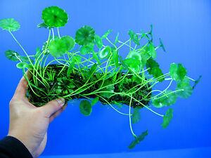 """Aquarium Plastic Plants 10"""" Ornament Fish Tank Decor"""