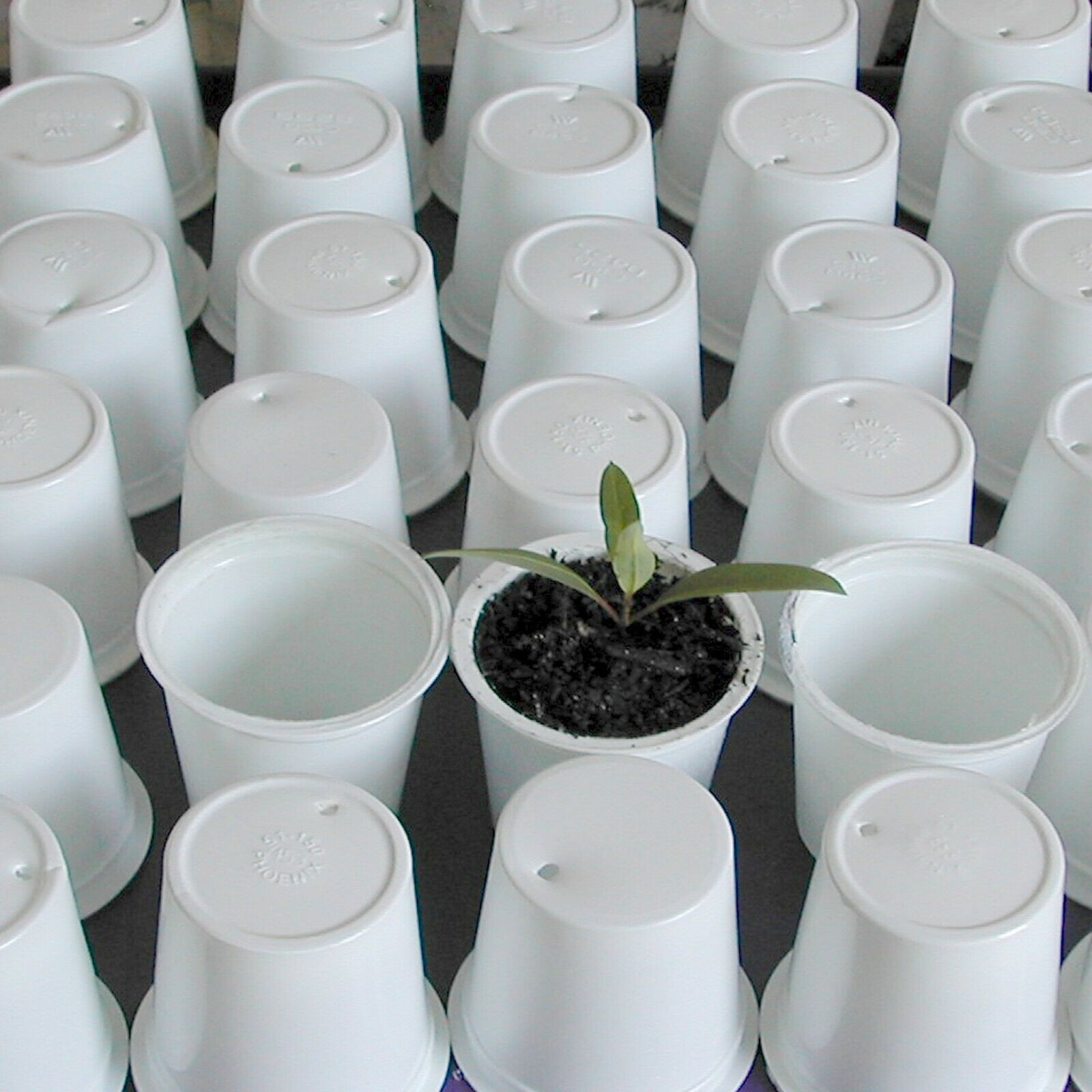 Box of 400 Garden Seedling Planting Plastic Cups Arts Crafts Growing Baby Plants