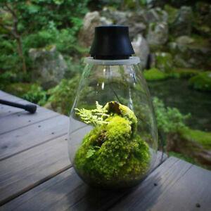 Japanese Moss Terrarium with LED lighting, Mosslight  Black Brand new