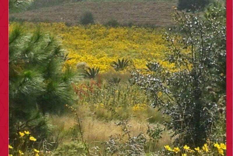 Excelente Terreno para Desarrollo en Huixquilucan 31.48 hectareas